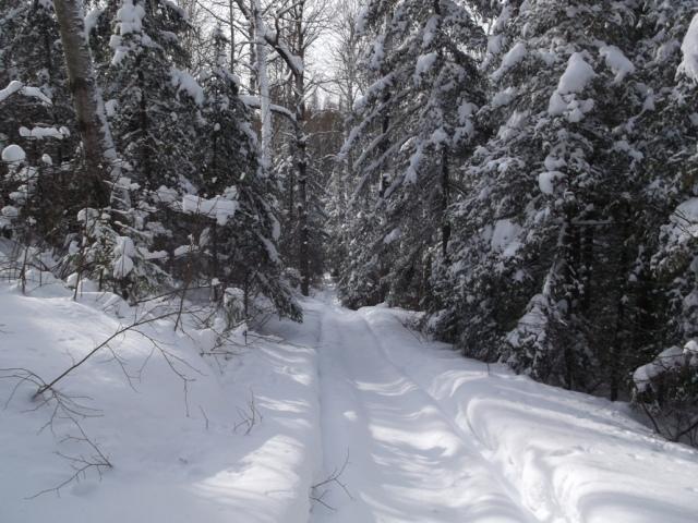 Trail down to lake