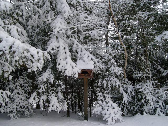 Birdfeeder in Feb 2012