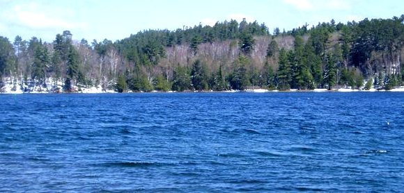 Loon visits at Whitches Point