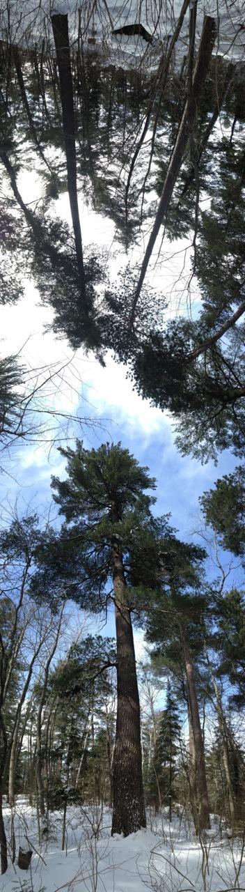 tree1- Bob Olajos